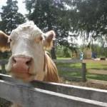 Farm Week